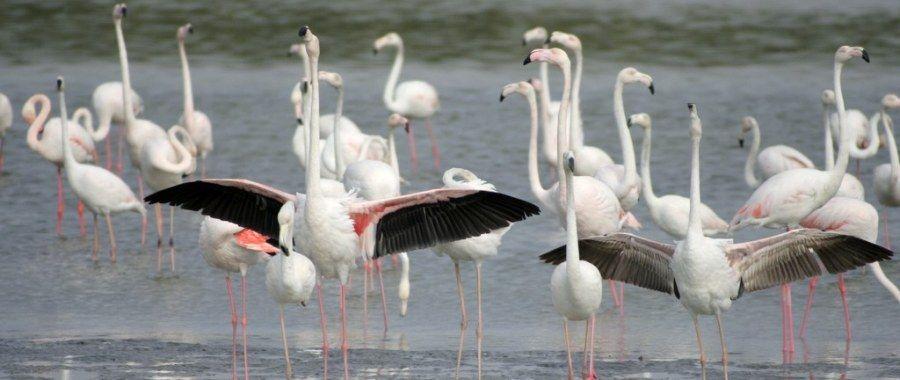 Ras Al Khor Bird Sanctuary in Dubai